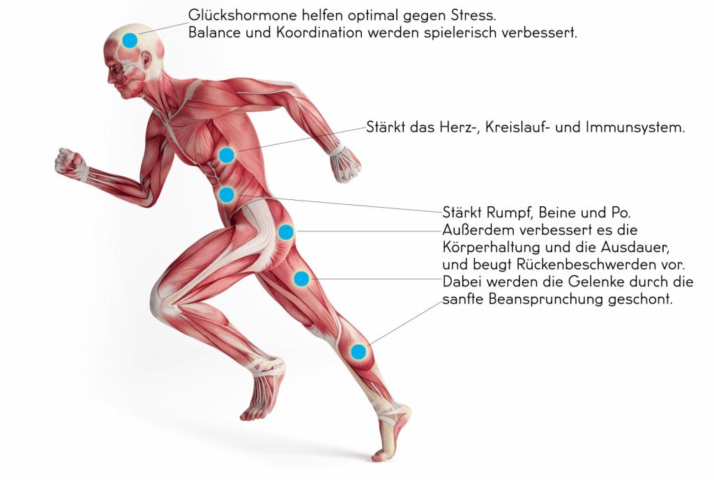 Muskeln die beim Fitness Jump Kurs trainiert werden